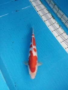 0132-ii aquarium, balikpapan, kkc, kediri, kuhaku, 33,fm